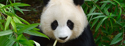 Special offer to Chengdu. Click here to learn more
